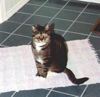 Jimmy - a very fine mouser